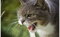 Funny Angry Cats 2 Background Wallpaper
