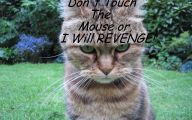 Funny Angry Cats 20 Free Wallpaper