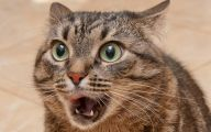 Funny Angry Cats 25 Hd Wallpaper