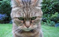 Funny Angry Cats 28 Cool Wallpaper