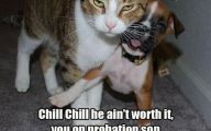 Funny Angry Cats 7 Free Hd Wallpaper
