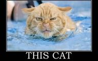 Funny Angry Cats 8 Hd Wallpaper