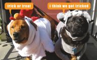 Funny Animal Costumes 10 Desktop Wallpaper