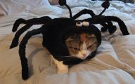 Funny Animal Costumes 21 Widescreen Wallpaper