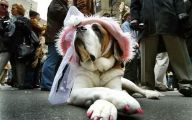 Funny Animal Costumes 28 High Resolution Wallpaper