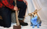 Funny Animal Costumes 3 Cool Wallpaper