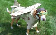 Funny Animal Costumes 32 High Resolution Wallpaper