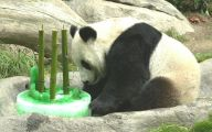 Funny Animals At The Zoo 10 Desktop Wallpaper