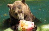 Funny Animals At The Zoo 11 Free Wallpaper