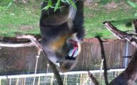 Funny Animals At The Zoo 18 High Resolution Wallpaper
