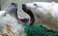 Funny Animals At The Zoo 28 Free Hd Wallpaper
