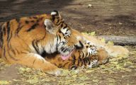 Funny Animals At The Zoo 29 Cool Hd Wallpaper