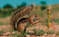 Funny Animals Movies 12 Free Wallpaper