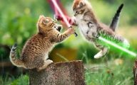 Funny Animals Movies 24 High Resolution Wallpaper