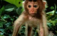 Funny Animals Movies 32 Cool Hd Wallpaper