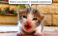 Funny Animals Pictures 2 Wide Wallpaper