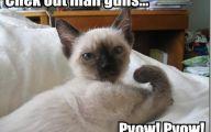 Funny Animals Pictures 20 Desktop Wallpaper