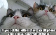 Funny Cat Selfies 13 Background Wallpaper