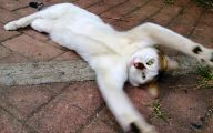 Funny Cat Selfies 23 Widescreen Wallpaper