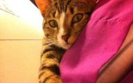 Funny Cat Selfies 29 Widescreen Wallpaper