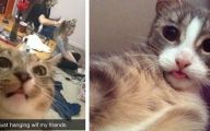 Funny Cat Selfies 6 Background