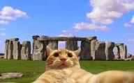 Funny Cat Selfies 8 Cool Wallpaper