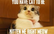 Funny Cats Being Scared 21 Free Wallpaper