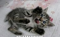 Funny Cats Being Scared 22 Free Hd Wallpaper