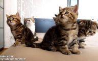 Funny Cats Dancing 10 Hd Wallpaper
