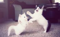 Funny Cats Dancing 11 Free Wallpaper