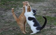 Funny Cats Dancing 13 Free Hd Wallpaper