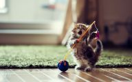 Funny Cats Dancing 17 Cool Wallpaper