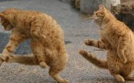 Funny Cats Dancing 18 Background