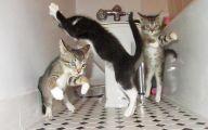 Funny Cats Dancing 5 Free Hd Wallpaper
