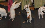 Funny Cats Dancing 9 Desktop Wallpaper