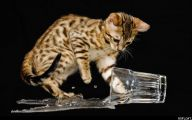 Funny Cats In Water  12 Free Wallpaper