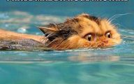 Funny Cats In Water  15 Desktop Background