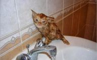 Funny Cats In Water  23 Desktop Wallpaper