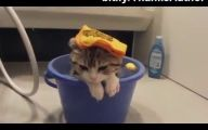 Funny Cats In Water  3 Free Wallpaper