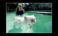 Funny Cats In Water  31 Desktop Wallpaper