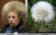 Funny Celebrities Look Alike 19 Desktop Wallpaper