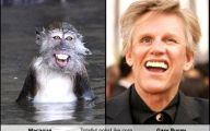 Funny Celebrities Look Alike 21 Hd Wallpaper