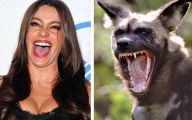 Funny Celebrities To Dress Up 15 Background Wallpaper