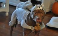 Funny Costume For Dogs 1 Cool Hd Wallpaper