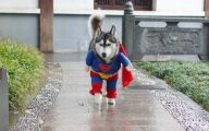 Funny Costume For Dogs 10 Background Wallpaper