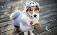 Funny Costume For Dogs 13 Background Wallpaper