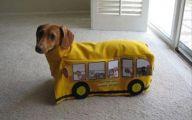 Funny Costume For Dogs 14 Desktop Background