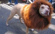 Funny Costume For Dogs 16 Cool Hd Wallpaper