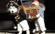 Funny Costume For Dogs 18 Background Wallpaper