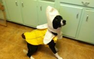 Funny Costume For Dogs 21 Free Wallpaper